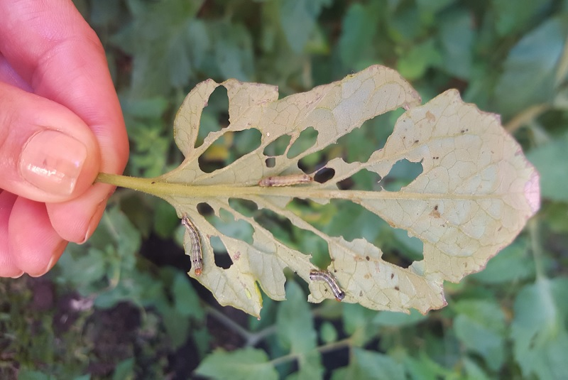 Los biopreparados mantienen a las plantas sanas y vigorosas
