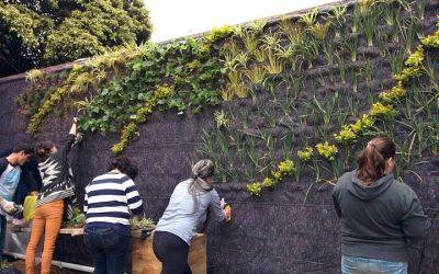 El ABC de los jardines verticales: qué son y qué beneficios traen