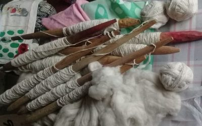 En algodón agroecológico, el INTA y Embrapa hilan fino