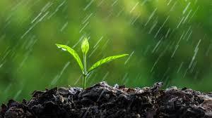 Prevén ascenso térmico con precipitaciones moderadas