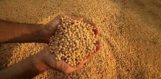 Con datos públicos armó un algoritmo que permite proyectar los precios de la soja