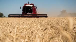 Al mal clima se suman enfermedades en trigo, cae la proyección de producción a 18,5 millones toneladas