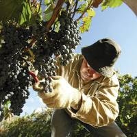 Agricultura celebra la Semana del Vino como Bebida Nacional