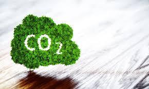 Bonos de Carbono y Bonos Verdes: dos miradas que se complementan
