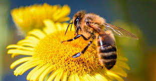 Cuidar la biodiversidad para incrementar la producción