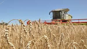 Cinco variables sanitarias que definen el éxito del trigo
