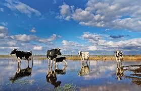Elevadas temperaturas acompañadas por precipitaciones en gran parte del área agrícola, luego fuerte descenso térmico.