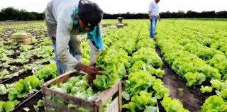 Consenso para mejorar las garantías de la inocuidad en la producción de alimentos