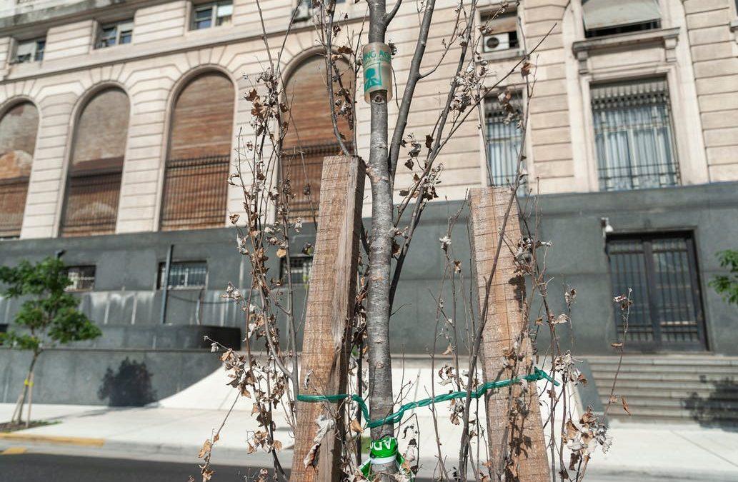 Paseo del Bajo porteño: un tercio de los nuevos árboles están secos
