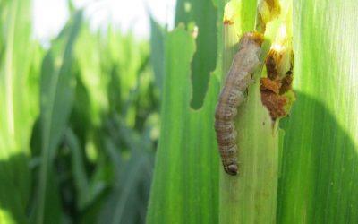 Compuestos vegetales para desarrollar biofertilizantes ecológicos para el agro