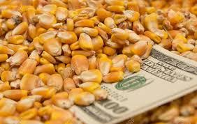 Negocios por maíz tardío de la campaña 2019-2020 destacaron en el mercado local de granos