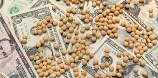 Valores ofrecidos dispares y operatoria moderada en el mercado de granos local