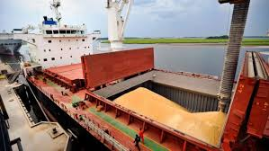 El fuerte ingreso de la cosecha no detiene la escalada en los precios del trigo