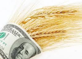 Importante suba del precio del trigo con descarga estimuló los  negocios en el mercado local de granos