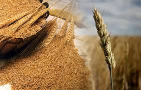 Positivo balance para las exportaciones de trigo de la campaña 2018-2019