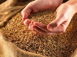 Los cereales de la campaña 2021/22 animaron la rueda local
