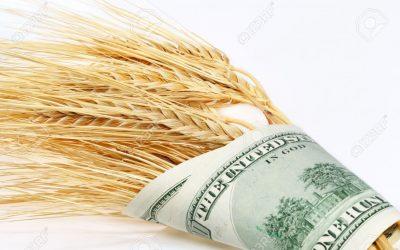 El precio del trigo de la nueva campaña registró una fuerte baja en el mercado local