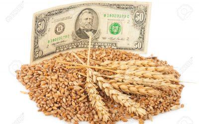 Fuerte suba para el precio del trigo: cómo impactó en el mercado local