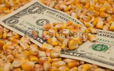 Fuertes bajas: el maíz cayó a un mínimo de seis semanas en Chicago y repercutió en Rosario