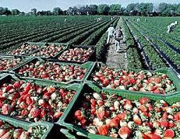 Costo de la energía y créditos para inversión productiva, los pedidos de productores frutihortícolas a Basterra