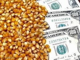 El maíz descolló en el mercado de granos local