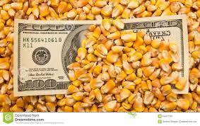 Repunte en la actividad comercial motorizada por el maíz en el mercado de granos local