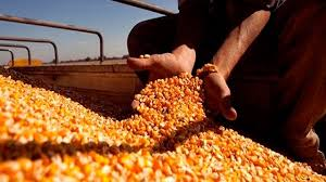 Un récord de 36 millones de toneladas de maíz se exportó en 2019
