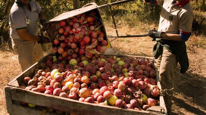 Entra en vigencia la obligatoriedad de las Buenas Prácticas Agrícolas para producir y comerciar frutas