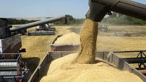 Argentina exportará más de 1,2 millón de toneladas de trigo a Asia