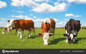 ¿La ganadería como responsable o potencial mitigador del cambio climático?