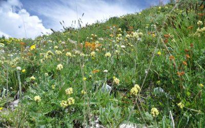 Las semillas en el Tíbet se enfrentan a los impactos del cambio climático
