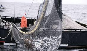 Durante 2019 cayeron el consumo, las capturas y exportaciones de  productos pesqueros