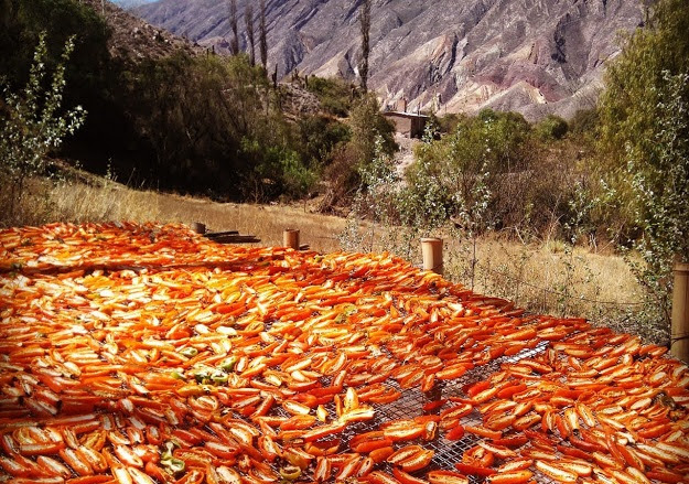 Modelo jujeño de economía circular: producen alimentos con residuos agrícolas y energía solar