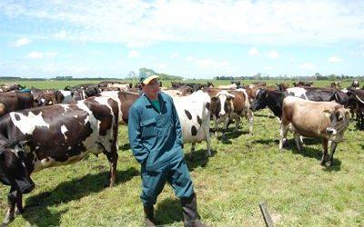 Nueva Zelanda alcanzó un récord de producción lechera con menos vacas