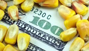 La comercialización de maíz destacó en el mercado de granos local