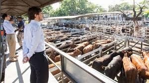 Ingresos de animales en alza en el Mercado de Liniers durante la primera quincena de febrero