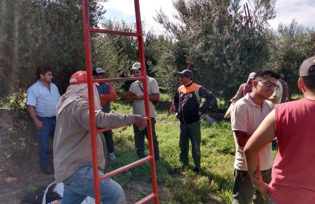 El Renatre fiscalizó a más de 650 trabajadores olivícolas en La Rioja