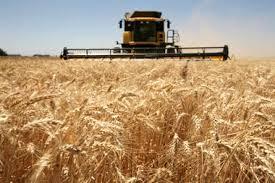 La demanda externa sostiene los valores del trigo