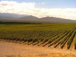 La superficie de vid creció 7% en los últimos 20 años, pero hay 1112 viñedos menos que en 2010