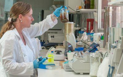 Descubren una especie de bacteria que degrada biomasa