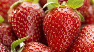 Cómo producir frutillas de calidad todo el año