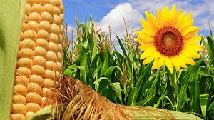 Mercado de granos local afectado por el cierre del Registro de  Declaraciones Juradas de ventas externas