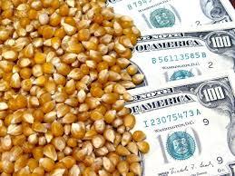 Leves mejorías en soja y maíz, en el mercado de granos local