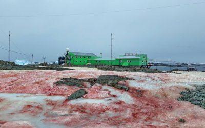 Nieve de sangre invade a una isla de la Antártida