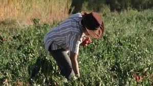 Un nuevo récord en la caída de confianza de los productores agropecuarios
