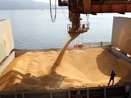 La exportación acumula 5,1 millones de toneladas de soja 2019-2020