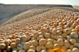 Jornada con actividad comercial escasa en el mercado de granos local con caída en soja