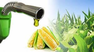 En la actual campaña 2019-2020 se producirían 587 mil m3 de  bioetanol de maíz
