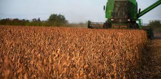 Pese a la coyuntura, la cosecha de soja cobra impulso
