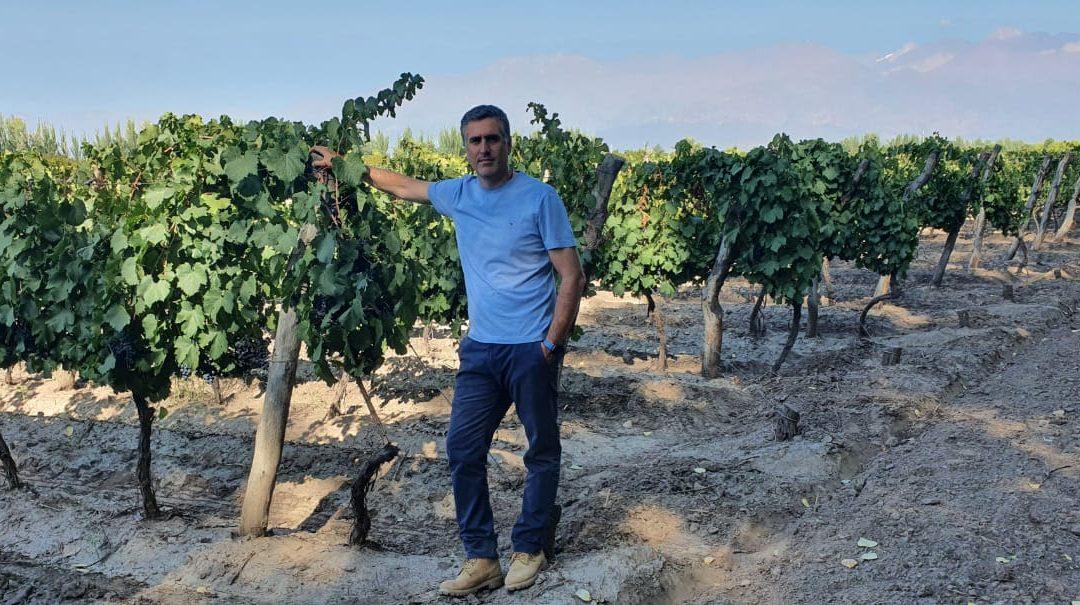 Uvas y frutales: fertilizar para no perder hasta el 50% de la próxima cosecha